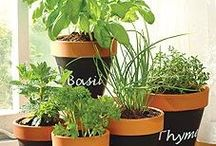Herbs / Plants we can eat