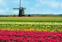 Dutch Food