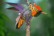 colibris_hummingbird_quindes
