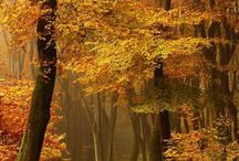 àrboles_alberi_trees