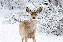 Winter Wonderland... :)