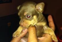 our doggie Beau