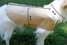 dog item