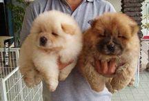 Cute dogs / OMG SOOOOO CUTE