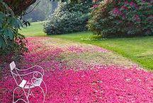 Flower Path Ways