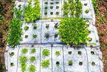 Gardening / by Michelle Dean Nelson
