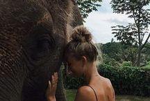 Safari.¸¸.✿`