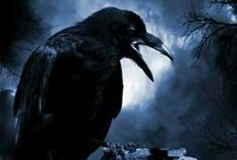 "Ravens / ""Quoth the Raven: Nevermore."""