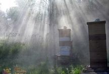 Beeginnings of Bee Healthy Farms / Started beekeeping and quickly discovered Apitherapy, which stimulated a desire to share with others these natural virtues.