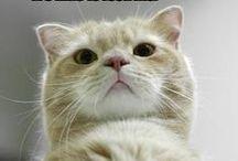 Tierisch: Katzen