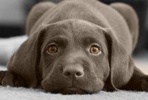Tierisch: Hunde
