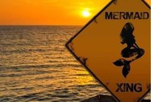 MerMaid Crossing / Mystical Mermaids......are they for real?!?!?! / by Marcy Parker