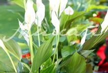 Detalles Flor y Plantas / Flores, plantas, ideas para decorar tu hogar o tu jardín.