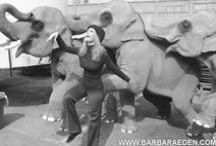 I ♥ Elephants / Elephants