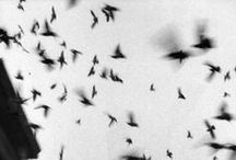 ☆ Oiseau sensuel / #Lingerie #Night #Sensuality / by Anais Bazaline