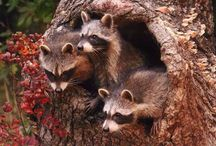 """Amazing Animals: / Beautiful, funny and amazing creatures. to be added to this board please comment """"add me"""" thanks .."""