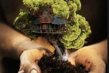 "Bonsai Trees: / Various bonsai trees. Small wonders.  If you would like to be added please comment ""add me"" thanks"
