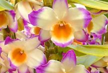 "Orchids: / Beautiful Orchids ....  If you would like to be added please comment ""add me"" thanks"