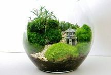 plants, garden
