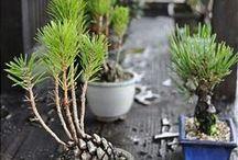 Garden ideas / Cool Garden, planting, and Landscaping ideas