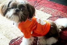 Four-Legged Tiger Fans / by Clemson Athletics