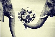 Elephant Luv / by annie m