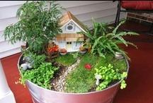 Miniature Gardens & accessories  / Teeny Tiny Gardens