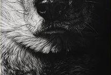 Inspiration - White on black