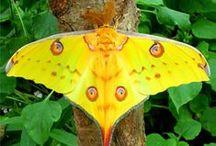 :Butterflies: