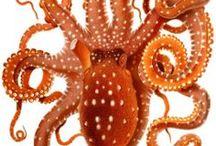 Octobus art
