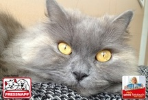 snap your cat / Pin to win Contest! Wir haben eine Gewinnerin! Mirjam und ihre Katze Habibi gewinnen einen 100 Euro Fressnapf-Gutschein! Danke an alle Teilnehmer - ihr erhaltet alle als Dankeschön einen 10 Euro-Gutschein für ein CEWE Fotobuch auf www.foto.at! Checkt eure Mailbox!