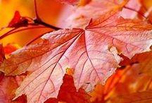 Herbstimpressionen / #Herbstfotos #Fotobuch #Fotokalender #Foto.at