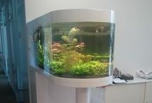 PLEXIGLAS® Aquariums & Specialty Glazing / PLEXIGLAS® for Zoo's, Waterparks, Marine applications and much more ...