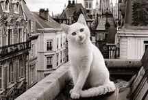 Gemütliches Katzenleben / So gelingen Ihnen schöne Fotos von Ihrem Liebling blog.foto.at