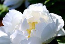 Foton blommor