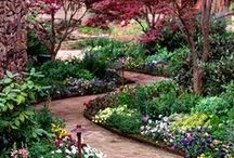 Landscaping Plants and Shrubs  / by Lonna Dickey