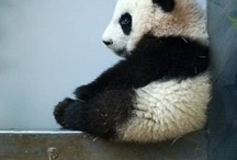 Baby animals I don't feel fear of... / null