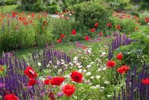 """Gardens / """"Flowers are restful to look at. They have neither emotions nor conflict."""" Freud"""