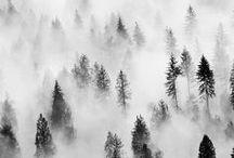 Fog & Shadow