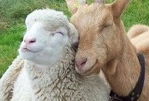 Animal Love / ☾☆ ♥ love and admiration for our animal friends ☾☆ ♥