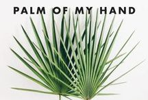 In The Palm Of My Hand / palm trees, palm leaves