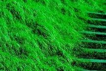 nuances de vert / gammes