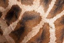 nuances de brun