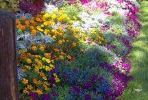 garden BA