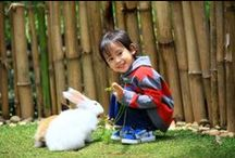 Rabbit Garden  / Kids and family are highly recommended to visit The Rabbit Garden, see how attractive they are! At the same time the kids will also gain new information on vegetables, spices and fruits, which grow in rabbit garden area. Open Daily from 08.00 am to 04.00 pm. www.novushotels.com