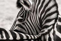 Animal Inspiration / by Ramon Gimeno