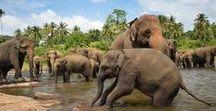 Voyage Sri-Lanka en famille / Toutes mes inspirations pour votre prochain voyage et séjour au Sri-Lanka en famille avec les enfants : circuit, que faire et que voir, hôtels de charme... #srilanka #voyageenfamille #srilankaenfamille #srilankenfants #asieenfamille #voyageavecenfants #asie