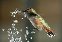 Oiseaux, papillons, libellules & Cie... / Belles photos d'oiseaux, papillons, libellules ou autres insectes...