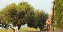 Safari Botswana en famille / Toutes mes inspirations pour votre prochain voyage et séjour et safari au Boswana en famille avec les enfants : circuit, que faire et que voir, hôtels de charme... Pour en savoir plus, visiter www.voyagefamily.com !
