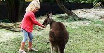 Voyage Australie en famille / Toutes mes inspirations pour votre prochain voyage et séjour en Australie en famille avec les enfants : circuit, que faire et que voir, hôtels de charme... Pour en savoir plus, visiter www.voyagefamily.com !
